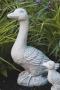 Large Goose